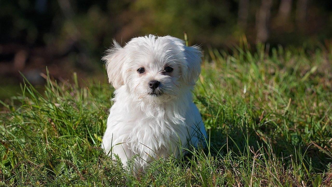 Vacunas indispensables para proteger a tus mascotas